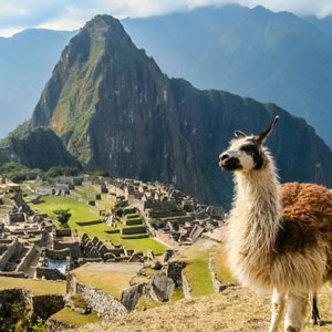 An adorable llama standing high above a backdrop of Machu Picchu