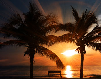 A view of a brilliant sunset on a beach framed by two palm trees